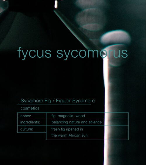 ZENOLOGY Fycus Sycomorus cosmetic notes